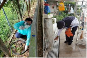 图示:NEA工作人员检查登革热蚊虫繁殖和诱杀幼虫;