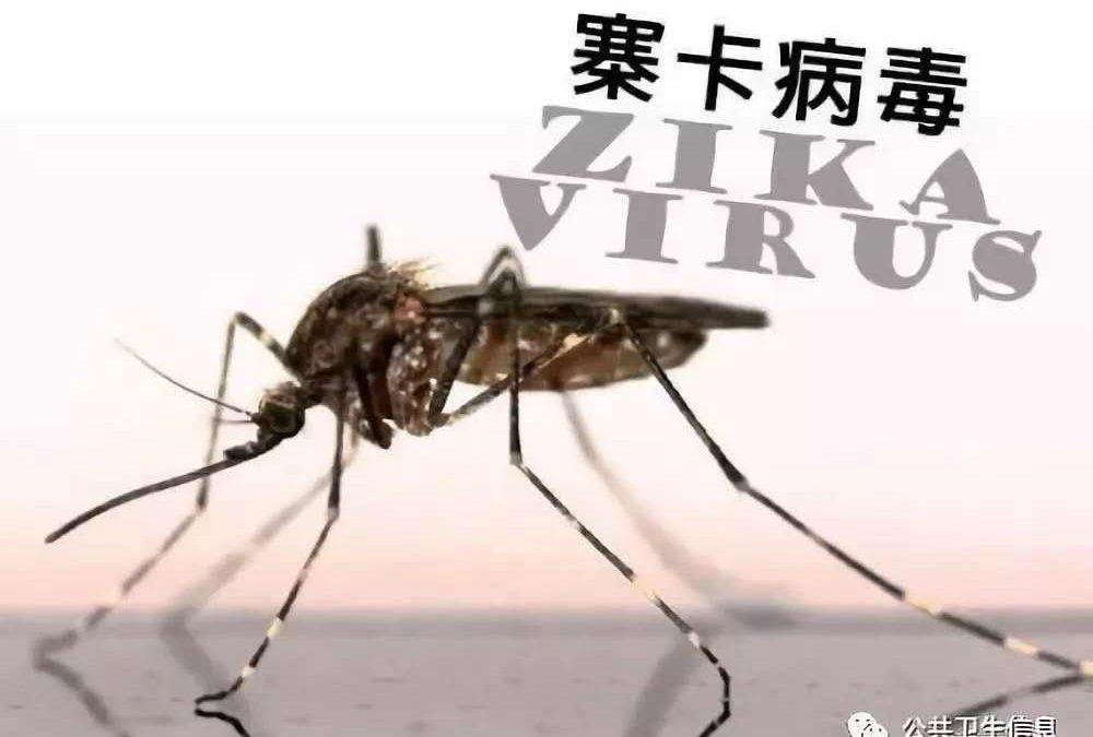 【寨卡】新疫情,刻不容缓!